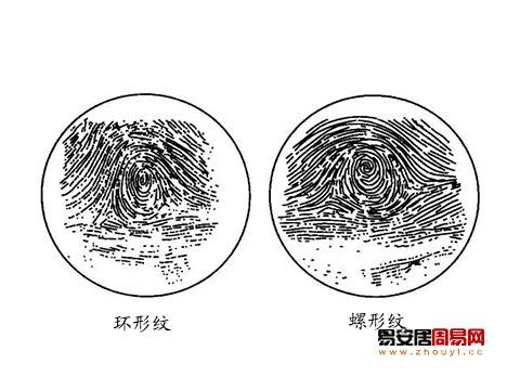 指紋環形紋螺形紋代表的性格