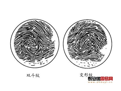 指紋雙斗紋變形紋