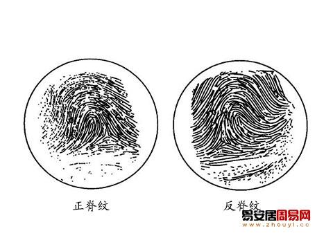 指紋正脊紋反脊紋
