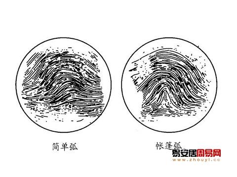 指紋弧形紋反映的性格